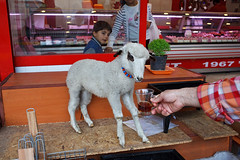 Lamb - Istanbul, Turkey (Maciej Dakowicz) Tags: city shop turkey market tea streetphotography goat istanbul butcher lamb uskudar