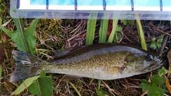 WP_20130722_003 (Cases4Cases) Tags: fish washington fishing bass lakewashington lakefishing smallmouthbass catchandrelease catchrelease