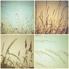 Splendour in the Grass (jesstink) Tags: nature grass canon countryside warwickshire suzannesmith canon7d jesstink