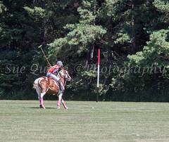 4 red scoring (Sue QuinnPhotography) Tags: 3 ottawa aug polo invitational 2013 ellisdon
