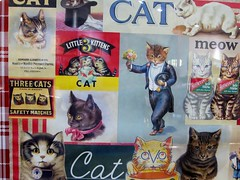 cat collage (Carolina Victory) Tags: collage cat mall university chapelhill