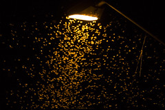 _SAM0646 (Eduardo Reigadas) Tags: night bug samsung inseto noite nx1000