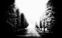 New ways of digging deeper (Marie Granelli) Tags: tree skne explore jordberga sdersltt