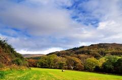 GillHouse Wood - nr Nether Wasdale (iScan-Cumbria) Tags: autumn gb wasdale landscapephotography netherwasdale muncasterfell copelandborough riverbleng irtonroadrailwaystation wasdaleeskdaleandduddon copelandukparliamentconstituency 2londonheadlakedistrictnationalparksantonbridgeholmrookcumbriaca191uyuk