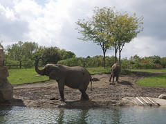 Indianapolis Zoo (davitydave) Tags: elephant animal lion indiana polarbear zookeeper cheetah giraffe baboon porcupine familytrip hoosier indianapoliszoo