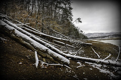 Fallen Trees (JLBowers) Tags: wood trees winter white lake snow mountains cold tree ice nature leaves landscape woods scenery branch quiet tennessee branches country freezing peaceful foliage freeze icestorm daytime limb bodiesofwater snowscene vingette cherokeelake jlbowers