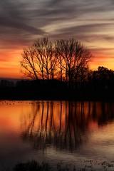 Sunset at the IJssel (Josette Veltman) Tags: sunset zonsondergang zwolle overijssel birdsanctuary vreugderijkerwaard