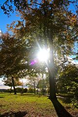 Autumn… (laufar1) Tags: park autumn tree nature leaves sunshine woods cusworth