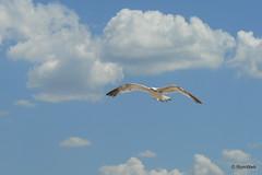 Крым, небо, облака, чайка