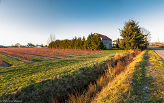 Ladner Cranberry field (Patricia Colleen) Tags: panorama barns farms streetsofladner