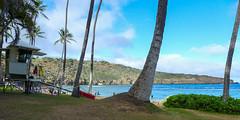 Hanauma Bay, Oahu (Ed Suominen) Tags: water palms hawaii bay oahu palmtrees