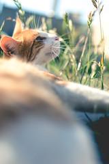 Buffy (Vampyyri.Lauri) Tags: cats laura cat gato felino buffy miau gatito tudela catlovers lauratudela