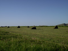 Hay Made, Brrapol, Isle of Tiree - Shari MacKinnon