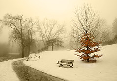 Foggy Day in Edwards Gardens (Iskou-Hee) Tags: winter snow toronto tree fog edwardsgardens treesubject