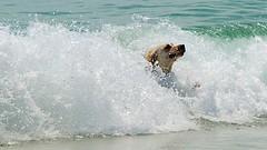 Rainbow Beach_D803932 (Drumsara) Tags: surf australia 4wd surfing dolphins queensland beaches sunshinecoast sanddunes fourwheeldrive rainbowbeach colouredsands tincanbay cooloolacoast drumsara lakepoona doubleislandpointinskipcarlosandblow