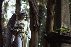 Averted Gaze (falamh) Tags: trees colour london film cemetery graveyard leaves stone angel mediumformat death stonework peaceful graves foliage bronica serene velvia100 highgate eternity eternal gs1 seraph vision:outdoor=0935
