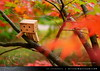 danbo_141 (iskandarbaik) Tags: park uk autumn trees england tree cute home forest toy photography leaf woods bokeh outdoor manga cardboard autumnal yotsuba danbo danbooru revoltech danboard cardbo danboru