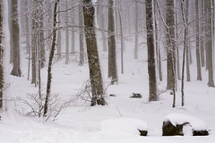monte amiata (imagina (www.giuseppemoscato.com)) Tags: trees winter italy landscape italia tuscany neve monte toscana inverno freddo grosseto paesaggio amiata vision:snow=0625 vision:outdoor=0972 vision:street=0546