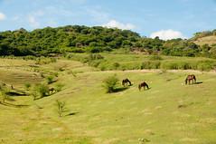 Bucolic setting (amataiclaudius) Tags: countryside jamaica hanover cou bucolic