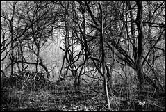 deep in the woods #1 (TheOtherPerspective78) Tags: vienna wien trees white black monochrome canon woodland nationalpark woods branches au ste wald weiss bume danube schwarz blairwitch wlder ef24105l donauauen dechantlacke eos5dii theotherperspective78