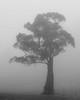 One Tree (GrisFroid) Tags: trees bw monochrome zeiss rural landscape nikon apo d810 135mmf2
