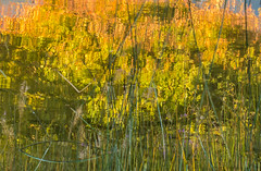 Can't stop Autumn. (Omygodtom) Tags: season autumn abstract art outdoors nature natural nikon d7100 dof pov leaves leaf reflections reflection bright tags flickr flower tamron90mm tamron senery scene scenic