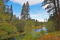 mh1290235metoliusHeadwaters (thom52) Tags: metoliusriver wizard falls fish hatchery bend or oregon
