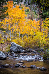 Boulders On Bishop Creek (mrperry) Tags: fallcolor fall autumn leaves aspens bishopcreek creek water boulders orange yellow landscape california easternsierra sierranevada inyocounty inyonationalforest