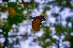 DSC06643-45_HDR (Capt Kodak) Tags: autumn chattahoocheerivernationalrecreationarea fall hdrefexpro2 madefrom3images medlockbridgepark nationalparkservice nikcollectionbygoogle niksoftware photomerge