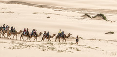 Camel-ride_DSC2723 (Mel Gray) Tags: birubibeach nelsonsbay portstephens camels beach newsouthwales outdoors