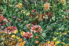 Flora Plenteous 69 (pni) Tags: flower plant multiexposure multipleexposure tripleexposure musiikkitalo musikhuset musiccentre helsingfors finland suomi pekkanikrus skrubu pni