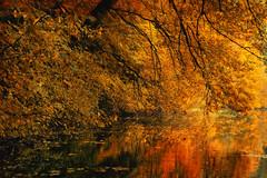 Herbsttne (novofotoo) Tags: herbst herbstwald landschaft natur reflexion rot wasser autumn landscape mirror nature orange red scenic water