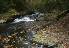East Lyn River, Exmoor (Daryl 1988) Tags: river exmoor uk england photography nikon nationalpark nature outdoors landscape waterscape landscapephotography leaves autumn season fall d2xs beautiful photo devon northdevon