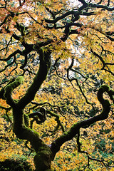 Japanese Maple (EighteenPercentGray) Tags: green fall autumn portland japanese garden gardens tree leaf leaves canon 70200 7d t3i nature bokeh maple