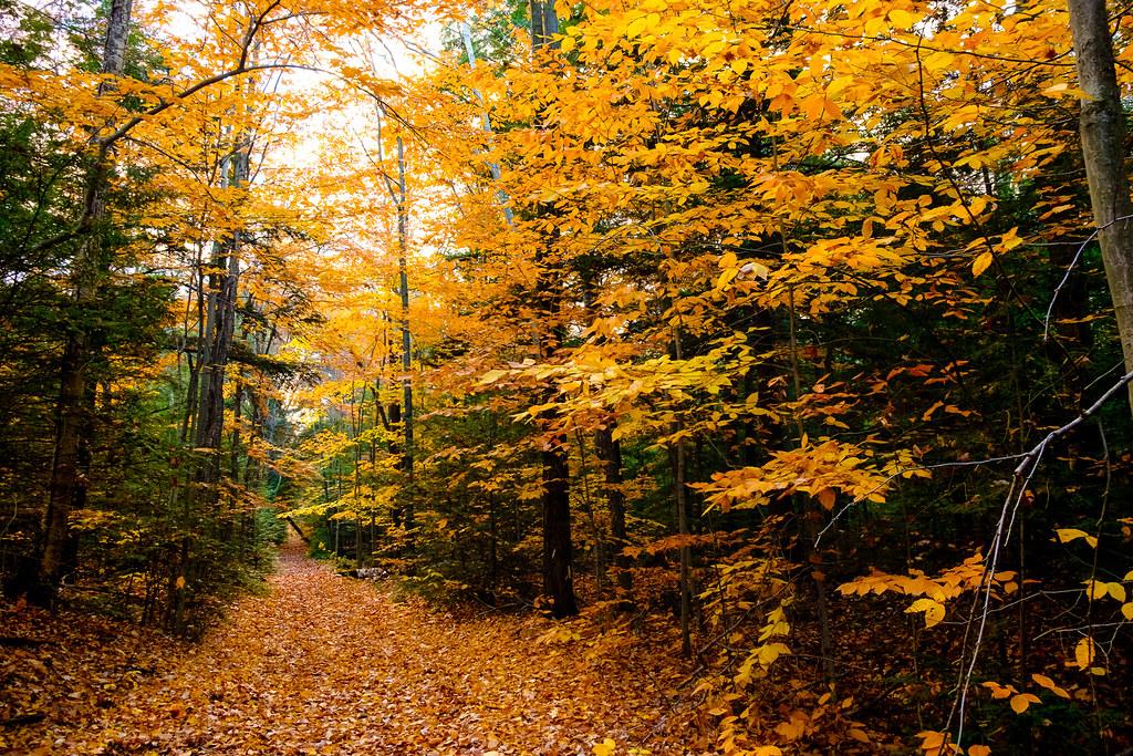 Autumn Tudor A Parau Tags Leafs Fall Orange Yellow Path Morgan