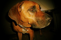 Man's best friend (SarahBelle17) Tags: dog nighttime closeup family bestfriend beautiful sweet animal tucson love