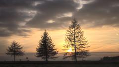 T(h)rees in a row - trzy drzewa w rzdzie (* mariozysk *) Tags: trees line arrangement sunset sun drzewa road clouds sky droga soce zachd soca mikoajki