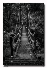 the bridge (jeremy willcocks) Tags: blackandwhite mono uk devon bridge riverteign trees jeremywillcocks wwwsouthwestscenesmeuk landscape fujixt10 xf1024mm
