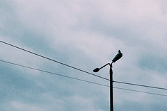 Timeless Rest (Hydr0X.) Tags: timeless rest bird sky cloud clouds cloudy birds pigeon pigeons crow crows light lights pole poles street streetlight wire wires grain grainy smartphone mobile one oneplusone oneplus f20 space time less resting noise noisy cable cables two white green