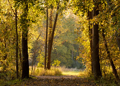 Portal (to the field where the antennae are) (bill.d) Tags: bicentennialpark kalamazoocounty michigan portage autumn fall goldenhour landscape nature outdoor woods unitedstates us explored