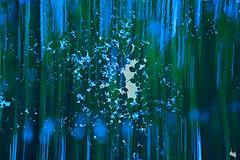 forest dream (Sandra Bartocha) Tags: sandrabartocha forestdream foliage wald tripleexposure