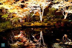 Tohoku 2016 - 516 (西文 Simon) Tags: 日本東北 miyagigun miyagiken 日本