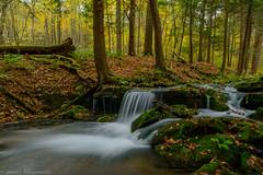 State Game Lands # 42 (clare j kaczmarek) Tags: patnc pastategamelands42 laurelhighlands autumn waterfalls mountainstreams moss