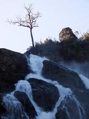Sentinel (LeelooDallas) Tags: australia tasmania bay fires pyengana columba waterfall tree forest dana iwachow fuji finepix hs20 exr