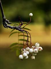 Oct 2016 LBG A157 (Explored) (Lostash) Tags: nature life plants flora seasons autumn leicesterbotanicalgardens