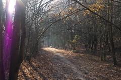 IMGP6111 (hlavaty85) Tags: cestalesem forest path sunrays slunko