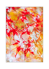 Just because of the colours (Gies!) Tags: doubleexposure leaves foliage bright yellow red colours autumn fall
