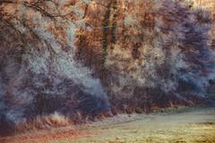 Frostiger Morgen (Sascha Wolf) Tags: dettenhausen badenwrttemberg deutschland de wald frost lichtstimmung reif kalt morgen bume vintage zeiss ikon vario talon
