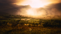 Fields of Gold (Motographer) Tags: fields agriculture rice paddy kerala southindia kanthaloor marayoor munnar westernghats landscape sunset rays dust trees nikon d7000 tokinaatx1116mmf28dx