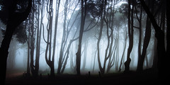 Voices from the Forest 3 (J C Mills Photography) Tags: portugal sintra forest woodland mist fog trees larch landscape sintracascaisnaturalpark